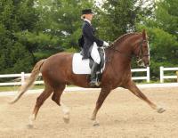 Maximus ridden by Sarah Busse Turner