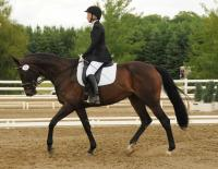 Harley ridden by Susie Curry